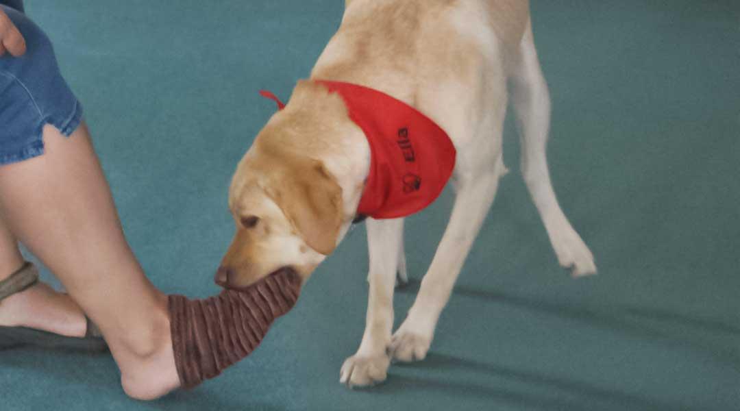Hund Ella hilft beim Socken ausziehen tiergestützte Therapie
