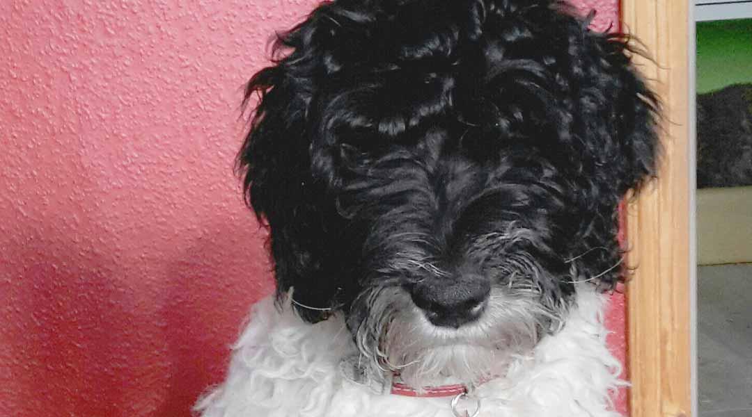 Tiergestützte Therapie Hund Seppel der Marcus Klinik